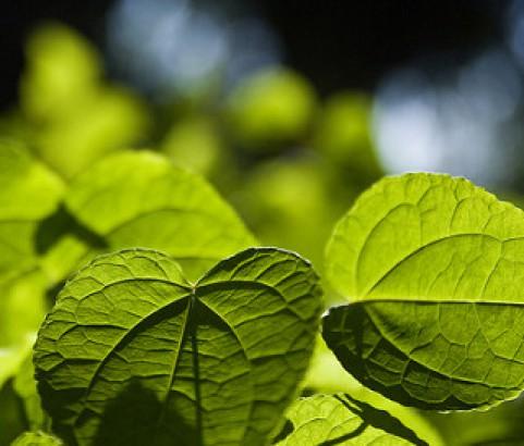 Veins of a leaf