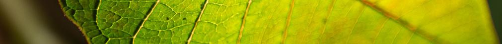 LeafSeparator2crop